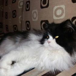 Uwaga! Rzeszów os. Mieszka I, zaginęła kotka!