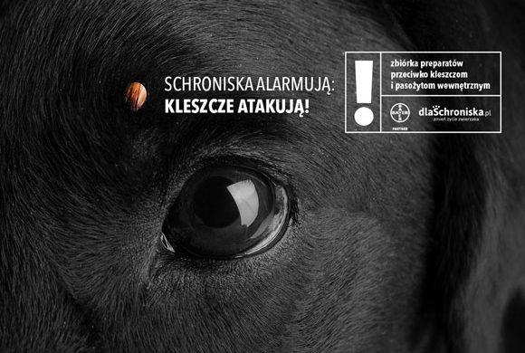 Pomóż nam zebrać środki biobójcze, dzięki którym wspólnie ochronimy bezdomniaki!