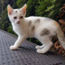 Szukamy domu dla kotków