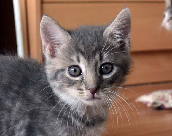 Kocięta Sary