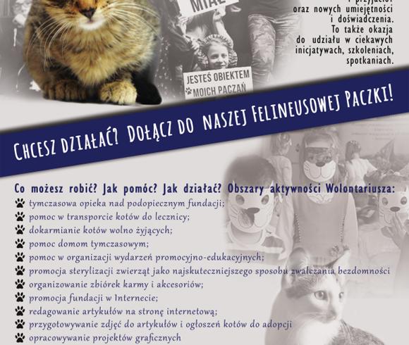 Chcesz pomagać? Dołącz do naszej felineusowej paczki!