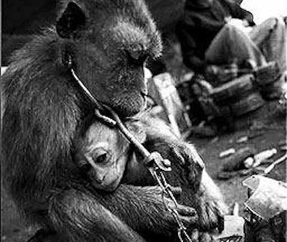 Ogólnopolski Dzień Praw Zwierząt – 22 maja