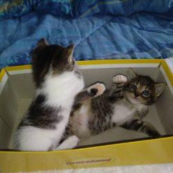 Informujemy, że Fundacja Felineus chwilowo wstrzymuje przyjęcia kotów z terenu miasta Rzeszowa.