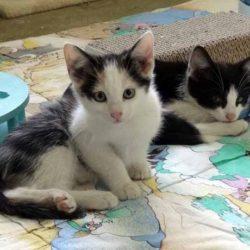 Kociaki z Wyżnego