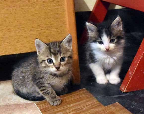 Kociaki z Chmielnika