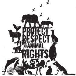 Ochrona zwierząt domowych przed niehumanitarnym traktowaniem (część 2)