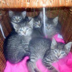 Ogłoszenie – Szukamy domu dla kociątek