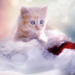 Zmiana ustawy o ochronie zwierząt – świąteczne marzenie bezdomniaków?