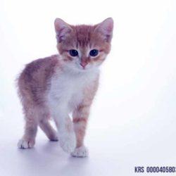 Kociaki Azji