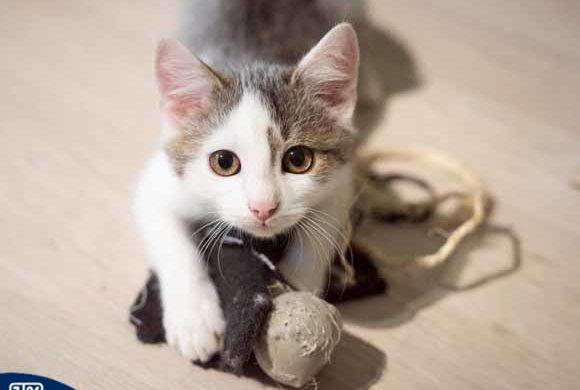 I law animals. Proponowane zmiany w Ustawie o ochronie zwierząt