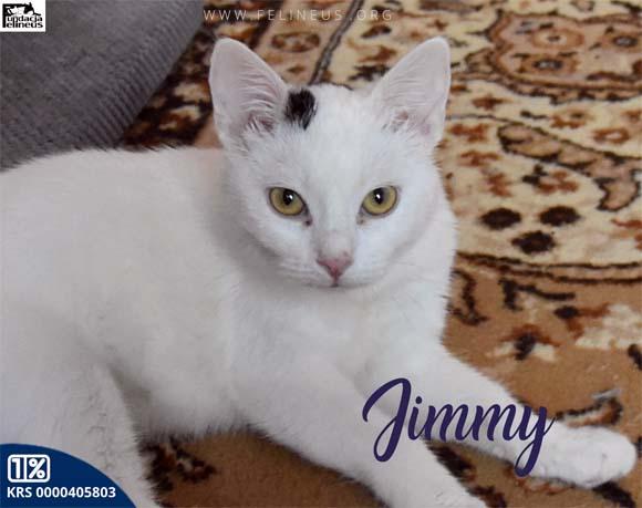 Jimmy (FelV+)