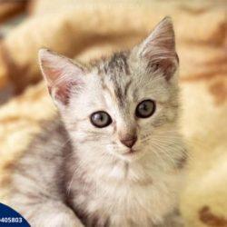 Jak karmić kota? Porady dla opiekunów