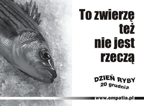 """Święto Ryby – czy karpie w Polsce wciąż """"głosu nie mają""""?"""