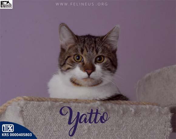 Yatto