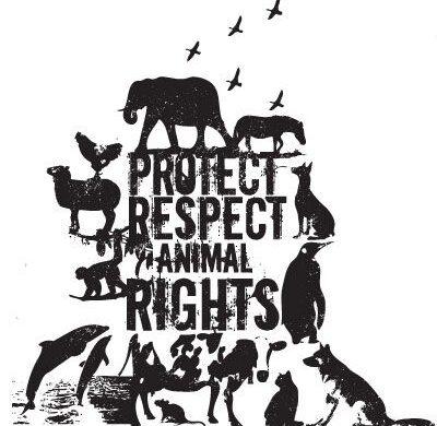 I law animals. Ochrona humanitarna zwierząt wolno żyjących (dzikich)